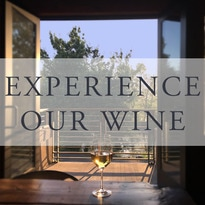 Experience our wine at Telaya